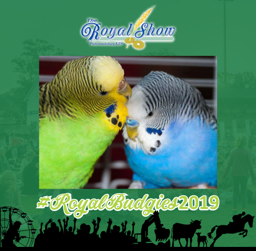Pietermaritzburg Budgie Club Exhibition