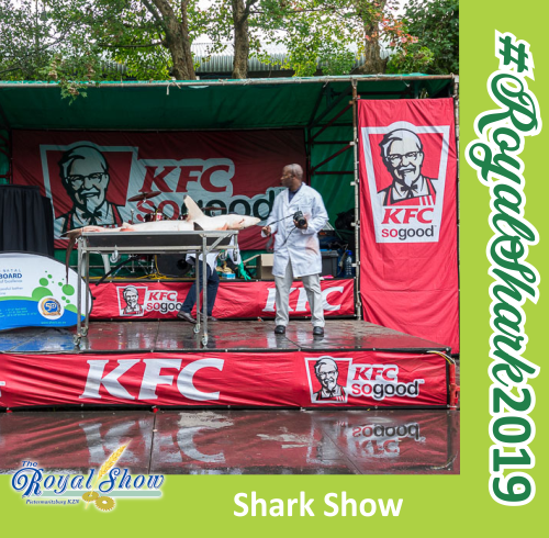 Royal Show - Shark Show